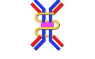 Будова імуноглобулінів (на прикладі молекули імуноглобуліну G)