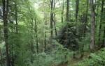Змішані ліси