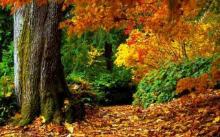 Твір «Ранок в осінньому лісі» – опис для учнів 2-8 класів
