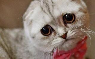 Кошеня не какає: причини, діагностика, лікування