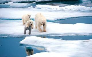 Повідомлення про Арктику