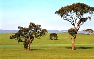 Рослини і тварини Австралії