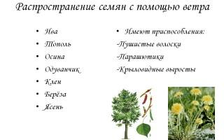 Поширення плодів і насіння за допомогою повітря