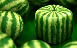 ✅Твір на тему ГМО: за і проти