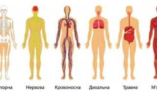 Функціональні системи організму
