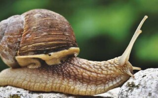 Значення молюсків у природі та житті людини