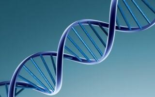 Розроблена унікальна методика прогнозування набору ДНК