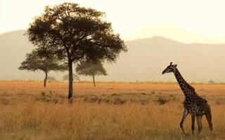 Чим відрізняється Африка від Австралії