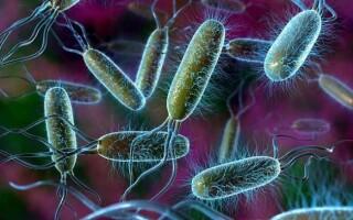 Порівняння будови і властивостей бактерій і рослин