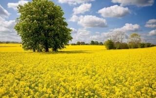 Природные условия и ресурсы Северо-Западного района