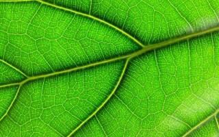 Прості і складні листки