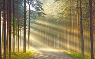 ✅Значення лісу в природі та житті людини