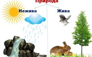 ✅Жива і нежива природа
