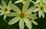 ✅Чим відрізняються однодольні рослини від дводольних рослин