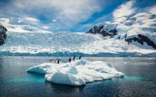 Чим відрізняється Антарктида від Антарктики