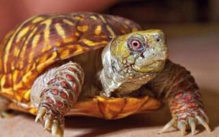 ✅ Твір «Черепаха – мій чотириногий друг»