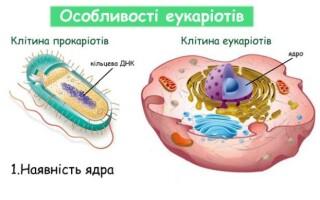 ✅Чим відрізняються еукаріоти від прокаріот