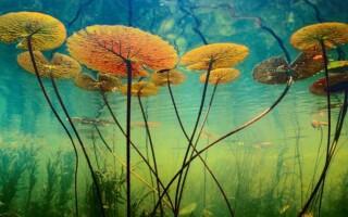 ✅Чим водорості відрізняються від рослин