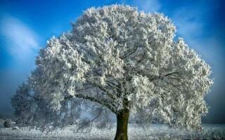 Твір на тему: «Дерева взимку»