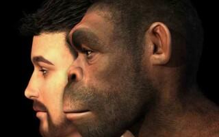 ✅Роль біологічних і соціальних факторів в еволюції людини