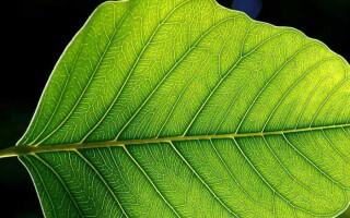 Чим відрізняється дихання від фотосинтезу