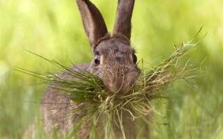 ✅Що їдять зайці?