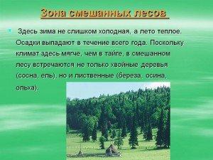 Зона змішаних лісів