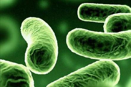 Господарське значення бактерій гниття і бродіння