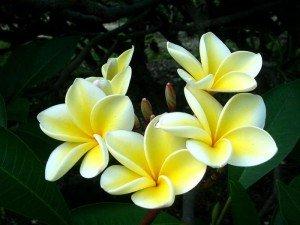 Центральні (головні) частини квітки
