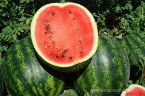 Формування сімені і плоду