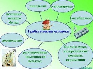 Загальна характеристика грибів