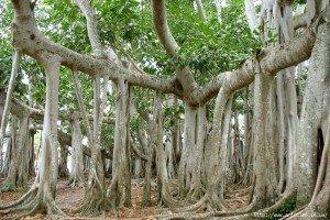 Ріст і розвиток кореня