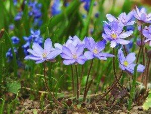 Загальні ознаки квіткових рослин