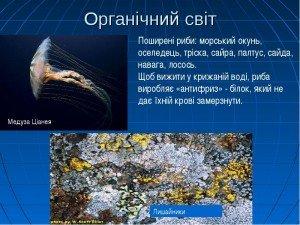 Органічний світ Північного Льодовитого океану