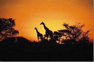 Країни Південної Африки