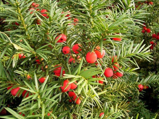 Рідкісні види рослин