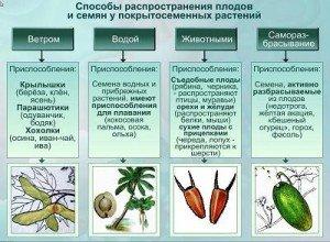 Основні способи поширення плодів і насіння у природі