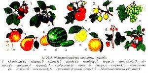 Соковиті плоди