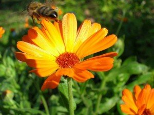 Основні періоди життя квіткових рослин