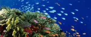 Життя в океані