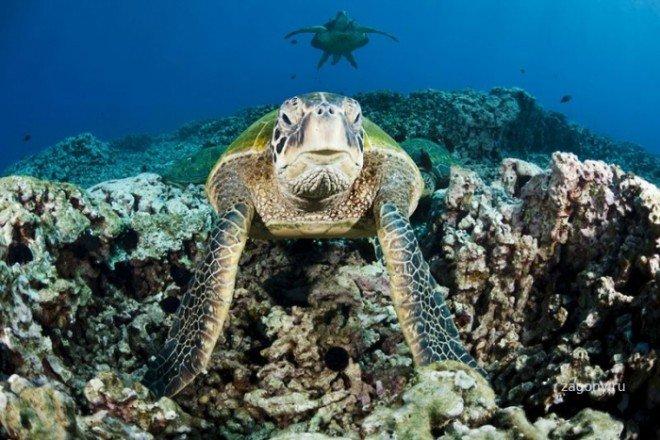 Життя в Світовому океані