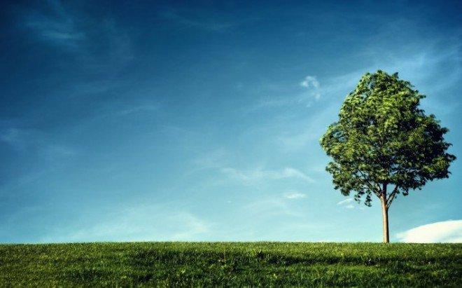 Значення дихання в житті рослин