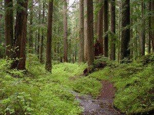 Світові масиви лісів поступово зникають