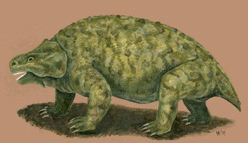 Черепахи загрожують перевернути еволюційне древо рептилій