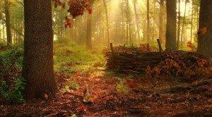 Гарні фото природи