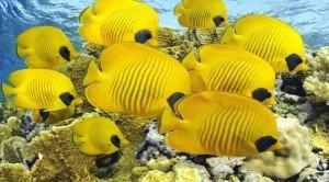 Гарні фото риб та океану