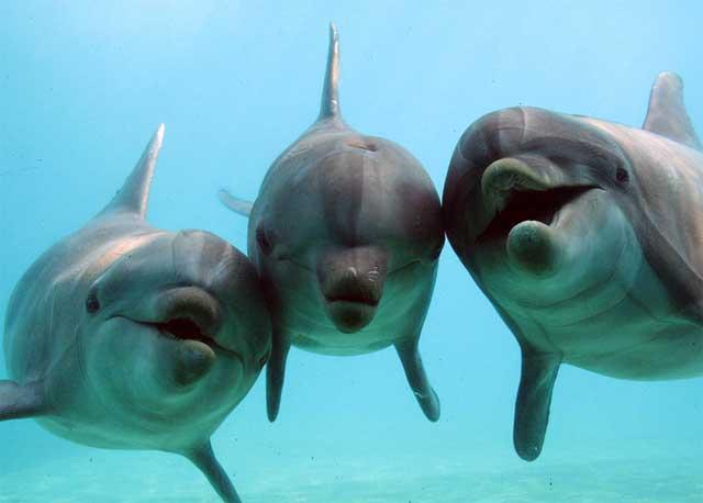 Тварини Тихого океану - дельфін