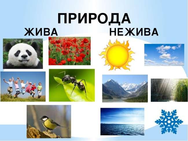 Чим жива природа відрізняється від неживої