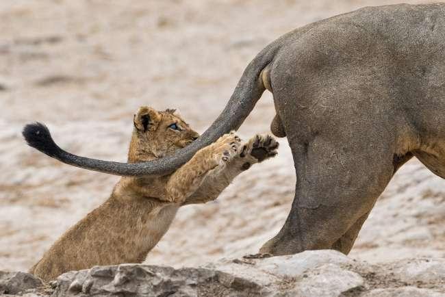 ✅Чим відрізняються звірі від тварин